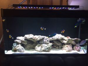 4 Channels Smart LED Aquarium Light 120cm for Coral Reef pictures & photos