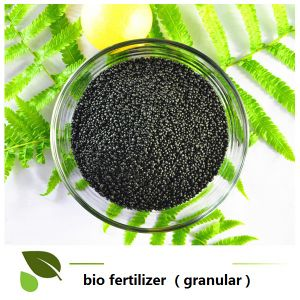 -seaweed micro bio organic manure in granula