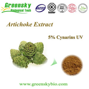 Artichoke Extract (Cynara scolymus) (leaf) (5% total caffeoylguinic acids) pictures & photos