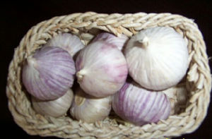 2017 Fresh Purple Garlic with High Quality pictures & photos