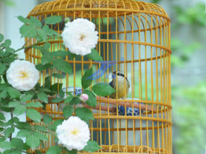New Style Bird Cage (TS-E129) pictures & photos