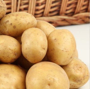 2016 Crop Fresh Potato at Cheap Price