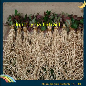 Water Soluble Houttuynia Extract pictures & photos