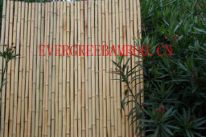 Bamboo Cane pictures & photos