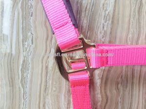 Hot Sale PP Webbing Horse Halters pictures & photos