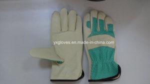 Green Garden Glove-Leather Working Glove-Safety Glove pictures & photos