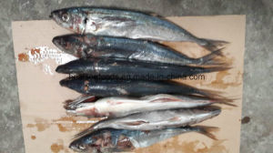 Carapau Frozen Horse Mackerel pictures & photos