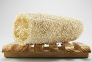 Nature Sponge Luffa pictures & photos