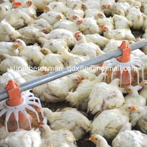 Top Quality Full Set Poultry Equipment for Poultry Farming House pictures & photos