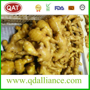 Fresh or Air Dry Organic Ginger with EU Standard pictures & photos