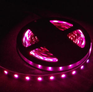 SMD5050 60LED/M Flexible RGB LED Strip pictures & photos
