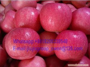 Shandong Origin New Crop FUJI Apple pictures & photos