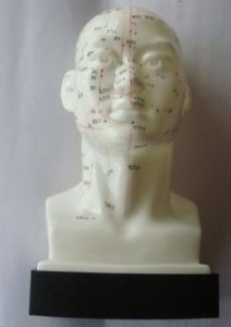 20cm Acupuncture Model - Head Model pictures & photos