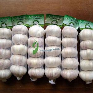 Fresh Garlic (XLDB01)