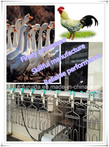 Automatic Poultry Farm Equipments/Stainless Steel Chain/Slaughtering Equipment pictures & photos