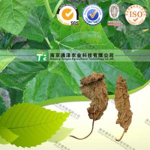 100% Pure Natural Folium Mori Mulberry Leaf pictures & photos