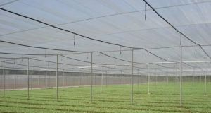 Greenhouse Netting pictures & photos