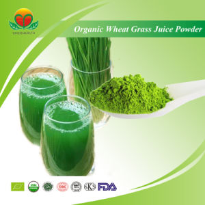 Manufacture Supplly Organic Wheat Grass Juice Powder pictures & photos