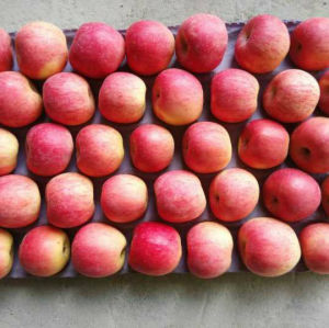 175-198 One Layer Blush Red FUJI Apple pictures & photos