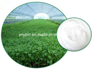 Hot Sale Stevia Extract Powder 80%~98% Stevioside, Food Additive pictures & photos