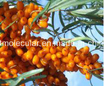 Organic Sea Buckthron Juice Powder, Hippophae Rhamnoides pictures & photos