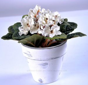 Multicolor Artificial Plastic Flower Violet in Paper Mache Pot for Decoration pictures & photos
