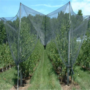 Color and UV Treatment Bird Netting pictures & photos