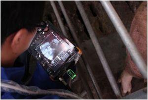 Handheld Waterproof Ce Certified 7 Inch Veterinary Ultrasound Scanner pictures & photos