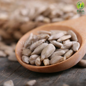 Chinese High Quality Sunflower Seeds Kernels for Confectionary pictures & photos