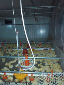 Nipple Drinker for Chicken Raising pictures & photos