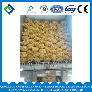 New Crop China Fresh Ginger of 250g Plus pictures & photos