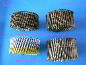 Coil Nail 2 pictures & photos