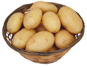 2013 New Crop Fresh Holland Potato