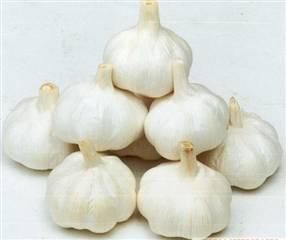 Fresh Garlic with Low Price and Good Quality pictures & photos