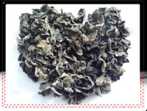 2013 Crop Black Fungus