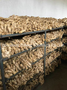Wholesale Organic Dry Ginger pictures & photos