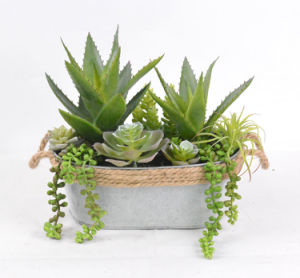 Mixed Succulent Artificial Plant for Decoration of Any Public Places-Home/Office/Bar with Iron Pots pictures & photos