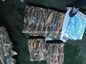 Frozen Illex Squid for Market (200-300g) pictures & photos