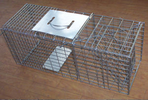 Humanistic Hunting Live Animal Trap Cages for Catching Rats/Mink/Rodent pictures & photos