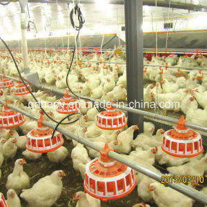 Full Automatic Feeding Controlled Poultry Equipment for Breeder pictures & photos