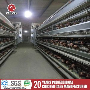 H-Type Hot Galvanized Chicken Layer Cage for Sale pictures & photos