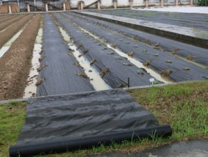 Black PP Nonwoven Ground Cover for Agriculture pictures & photos