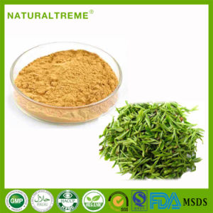 High Quality 50% Green Tea Extract Tea Polyphenols pictures & photos