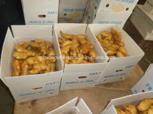 China Shandong Origin Fresh Ginger pictures & photos
