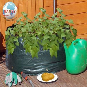 PE Material Growing Plant Bags for Your Garden pictures & photos
