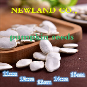 Chinese Hot Sale Food Snow White Pumpkin Seeds