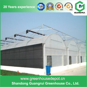 Multi-Span Tunnel PC/ Polycarbonate Sheet Greenhouse for Planting pictures & photos