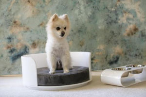 Acrylic Dogs Application Pet Bed&Feeders Engraved pictures & photos