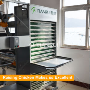 Farming Port Chicken Egg Collection System for Layer pictures & photos