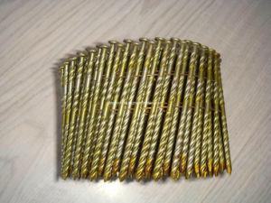 Screw Shank Coil Nail/ Pilish/Galvanized